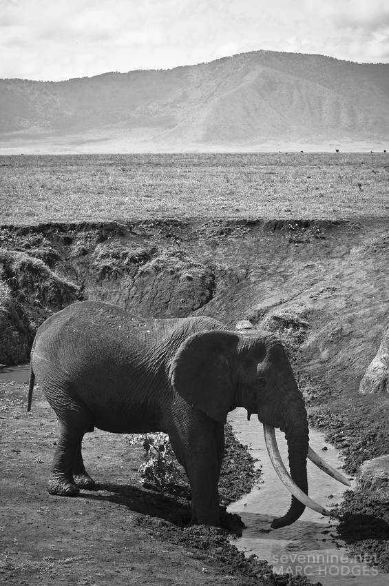 Elephant in a Crater