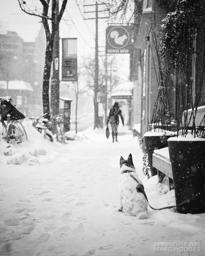 Leashed in the Snow