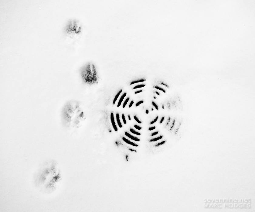 Paws and Drain