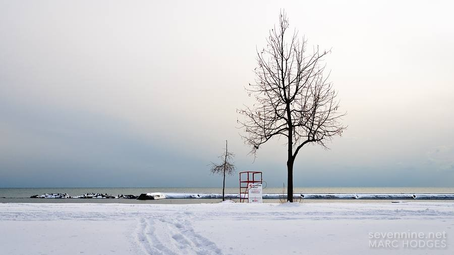 Two Trees and a Lifeguard Stand