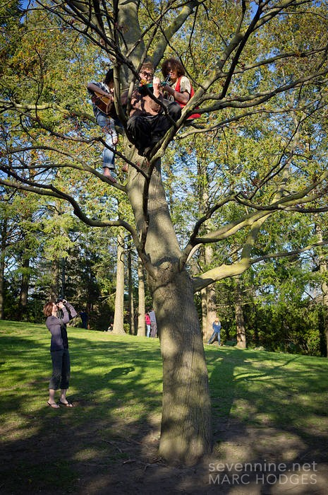 Musicians in a Tree