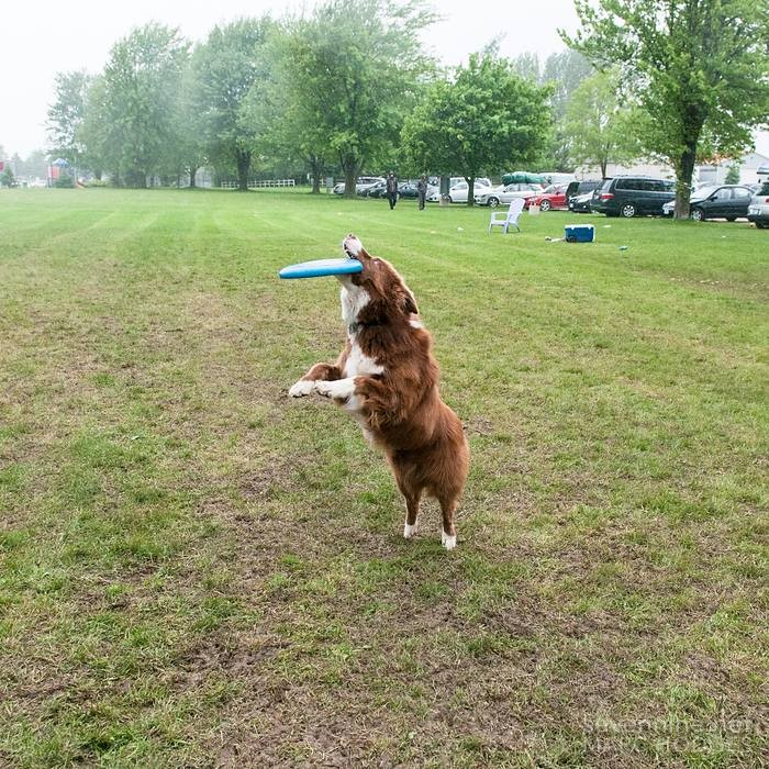Dogs Love Frisbees Too