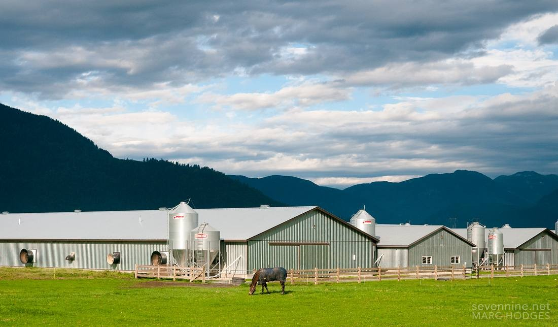 Chilliwack Farm